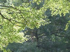 Biodiversité : une tribune de Jean de Kervasdoué
